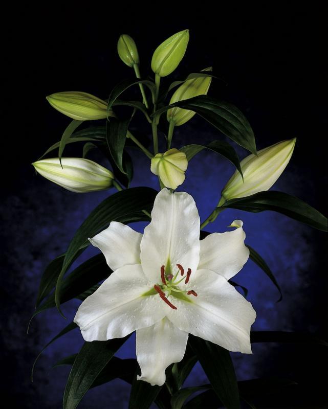 Декоративные растения деревья кустарники цветы